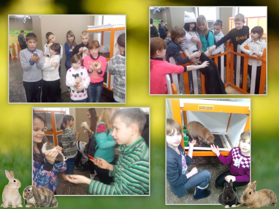 Выставка кроликов «Пушистики»