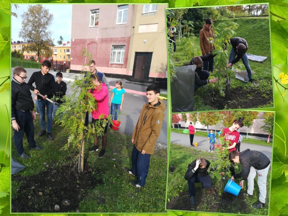 Участие во Всероссийской акции «Живи, лес!»